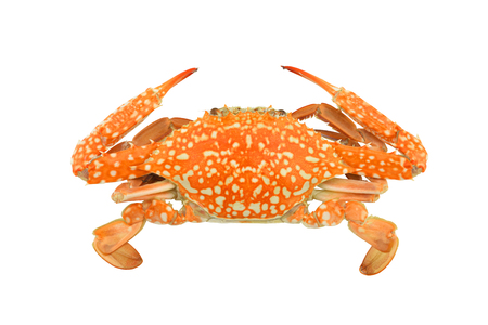 crab isolated on a white background clipping paths