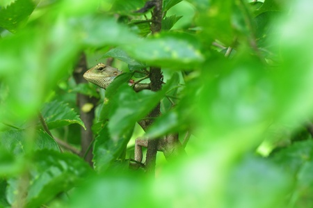 photo green garden lizard on plant trunk and leaves Stock Photo