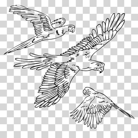 vector black outline sketch three macao birds