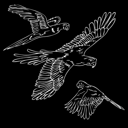 vector white outline sketch three macao birds at black background Stok Fotoğraf
