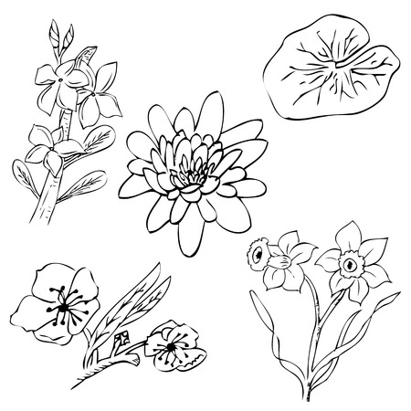 vector simple sketch of cherry, lotus, frangipani, daisy flower Imagens