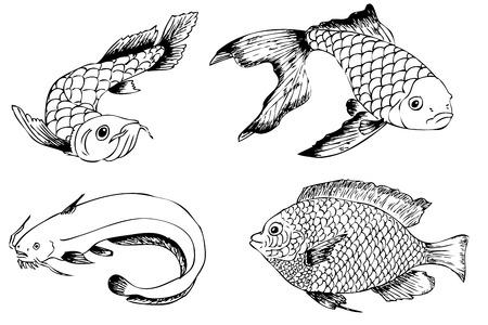 Sketch of Arowana, Koi, Nila and catfish Stock Photo
