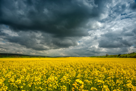 Storm clouds above a rape seed field photo