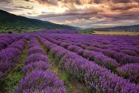 Prachtige landschap met lavendel veld in de vroege ochtend Stockfoto