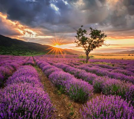 Paysage grandiose avec champ de lavande au lever du soleil