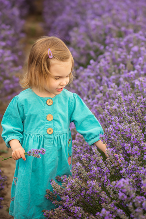 bulgaria girl: Lavender girl. Beautiful little girl on the background of a lavender field.