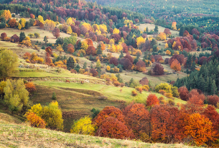 Amazing autumn view with horses on a meadow in the Rhodope Mountains, Bulgaria Archivio Fotografico - 109557016