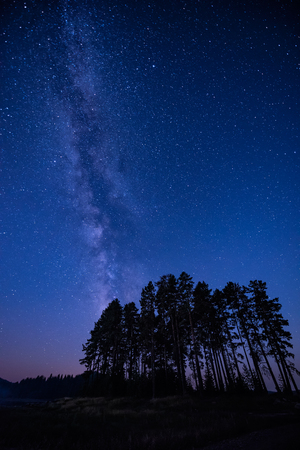 Long time exposure night landscape with Milky Way Galaxy above high coniferous trees Фото со стока