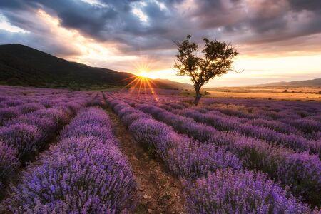 Vista mozzafiato con un bellissimo campo di lavanda all'alba