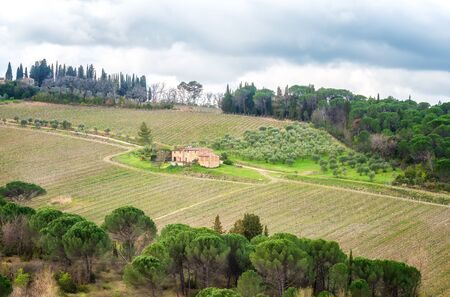Amazing Tuscany landscape with green rolling hills, olive trees, vineyards and farm houses 写真素材