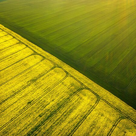 Aerial view of a beautiful rural area with yellow and green fields with rapeseed and wheat in golden hour before sunset.