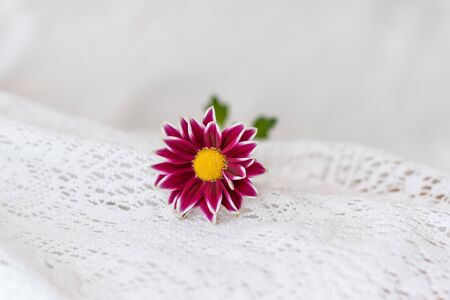 Close up view of a beautiful purple daisy flower on a white background 写真素材