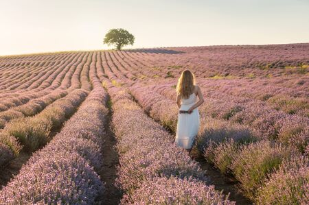Rear view of a woman in white dress, standing between rows of blooming lavender field at golden hour before sunset