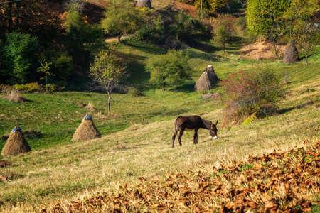 Amazing autumn view with a donkey grazing on an autumn mountain meadow, Balkan Mountains, Bulgaria
