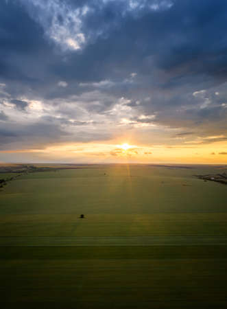 Aerial view with green field and a lonely tree in the middle at sunset 免版税图像