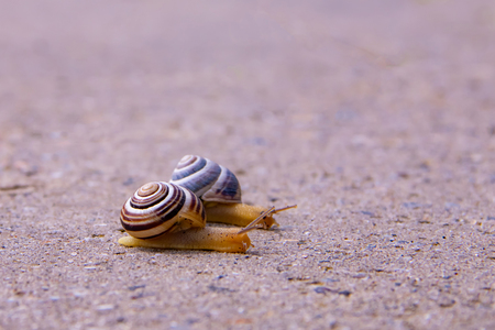 Two Snails crawling on a road after rain Фото со стока