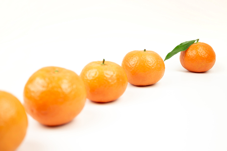 Tangerines in one line on a white background first go tangerine in focuse with green leafe with copyspace conceptual photo