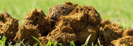Close-up pile of fresh horse manure on backyard of an organic farm 免版税图像 - 150454667