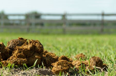 Fresh juicy pile of horse shit manure on the organic farm ground. Natural background background with copy space