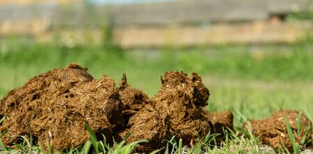 Close-up pile of fresh horse manure on backyard of an organic farm