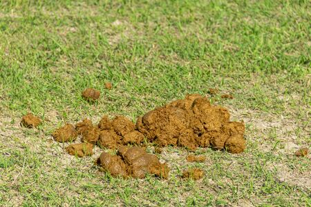 horse feces on the ground