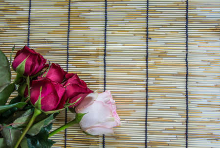 wood blinds: Roses placed on a woven wood blinds 1 Stock Photo