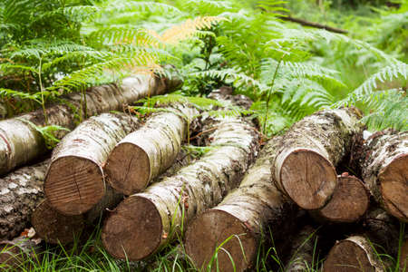 Pile of logs laying in the undergrowth on the forest floor Stock Photo