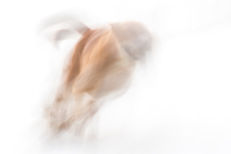 chasing tail: Abstract ,running dog