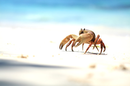 The  Crab on the Beach