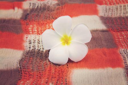 Closeup white plumeria flower,Vintage Effect photo