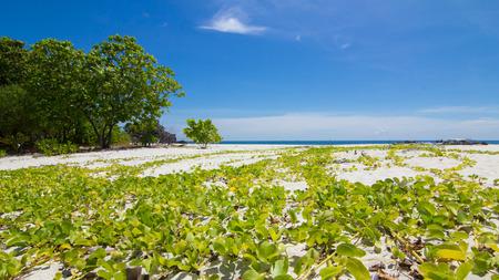 koh: Koh Kai Island,Thailand