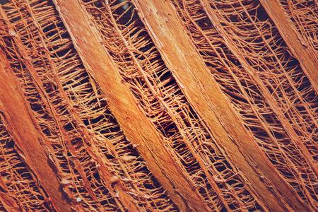 interweaving: Fiber on coconut tree for pattern background