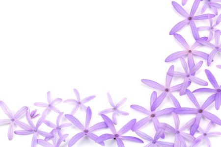 petrea: Petrea Flowers. (Queens Wreath, Sandpaper Vine, Purple Wreath)  isolated on white