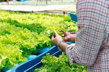 Hydroponics farm ,Worker testing and collect environment data from lettuce organic hydroponic vegetable at greenhouse farm garden.