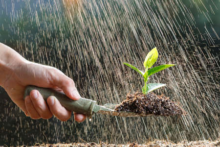 Farmer planting young sprout in fertile soil and watering.