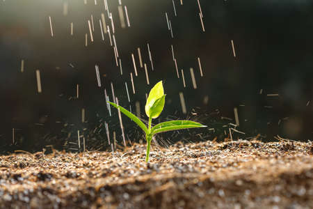 Close up young sprout in fertile soil with rain drop.