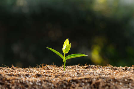 Close up young sprout in fertile soil. Stock Photo