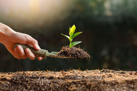 Farmer planting young sprout in fertile soil.
