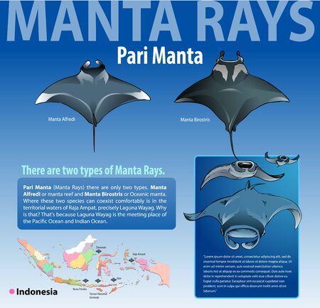 Vector illustration, info graphics various type of manta rays or pari manta