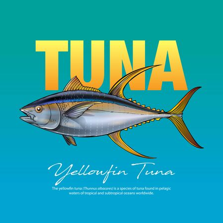Vector illustration, Yellow fin Tuna
