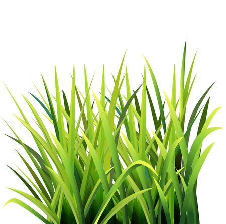 Vector illustration of grass, seen from the side. Illustration