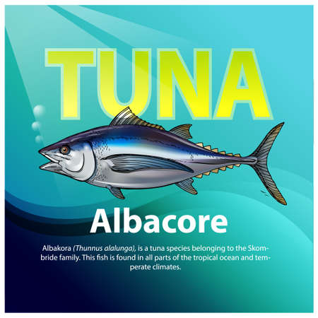 Vector illustration, Albakora or Thunnus alalunga, is a tuna species belonging to the Skombride family. This fish is found in all parts of the tropical ocean and temperate climates.