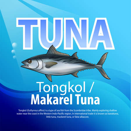 Vector illustration, Tongkol (Euthynnus affinis) is a type of sea fish from the Scombridae tribe. In international trade it is known as kawakawa, little tuna, mackerel tuna, or false albacore. Illustration