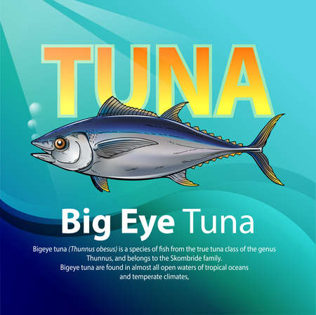 Vector illustration, Bigeye tuna (Thunnus obesus) is a species of fish from the true tuna class of the genus Thunnus, and belongs to the Skombride family.