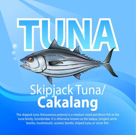 Vector illustration, Skipjack tuna or Cakalang is medium sized perciform fish inm the tuna family, scombridfae. Illustration