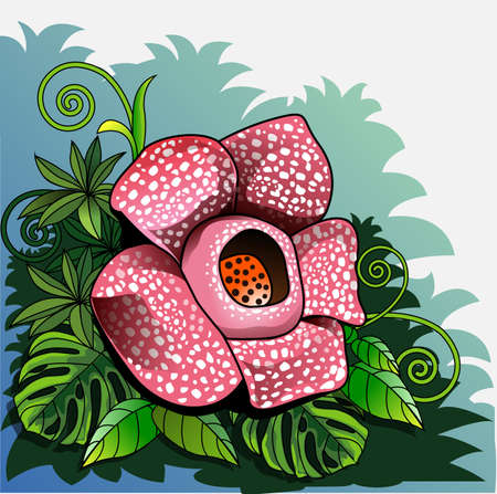 Vector illustration, Rafflesia arnoldii or giant padma, is one of Indonesia's three national flowers, and is officially designated as a rare flower or call of puspa langka.