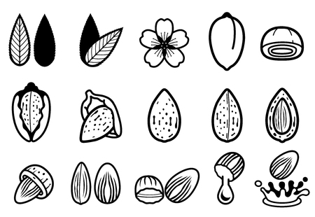 almond seed develop and product from almonds (icon concept). Illustration