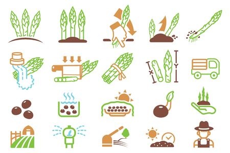 Cultivating asparagus from farm and export to market. Agricultural Product. Ilustração