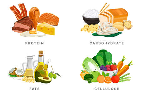 Basic nutrition group for daily energy. The Ratio consumption balanced diet with the body. Vecteurs
