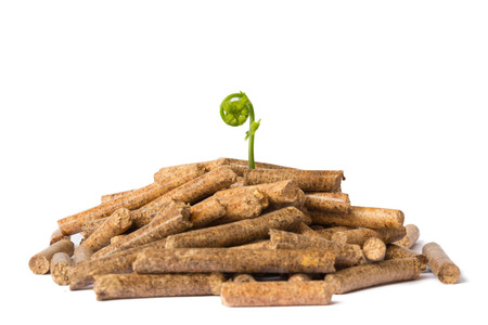 wood pellet: Young tree growing out of wood pellets on white background